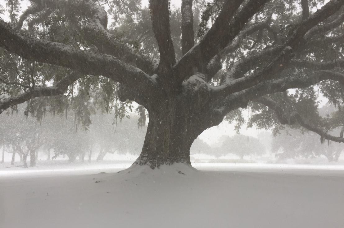 The Tree ofFaith